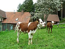 Der Bauernhof Weisser in Tennenbronn im Schwarzwald